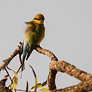 Rainbow Bee Eater 3 by mncphotography