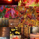 4 Seasons - Autumn / Fall, 4 Jahreszeiten - Herbst by Martina Cross