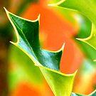 Ilex leaf closeup by ©The Creative  Minds