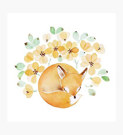 Nap under Yellow flowers Photographic Print