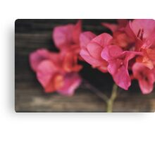 Rosewood Canvas Print