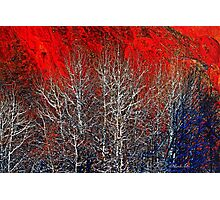 White Trees by Lena Owens/OLena Art Photographic Print