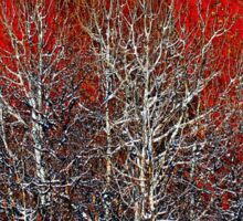 White Trees by Lena Owens/OLena Art Sticker
