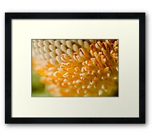 Giant Flower Framed Print