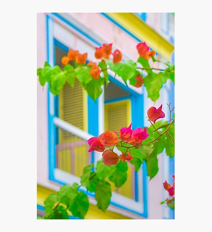 Colored Flowers in Front of  Windows House Photographic Print