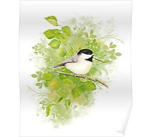 Cute Little Black-Capped Chickadee Watercolor Poster
