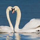 Loving Swans by M.S. Photography/Art