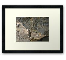 Rock Reptile Framed Print