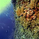 UNDERWATER LANDSCAPE PERSPECTIVES by NICK COBURN PHILLIPS