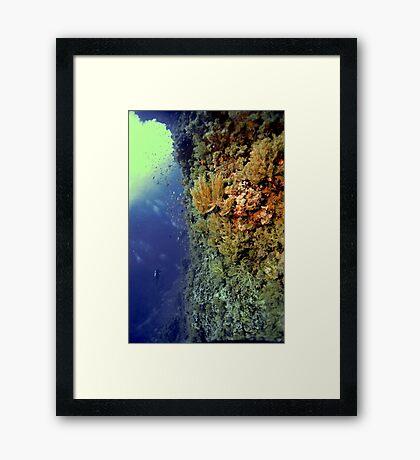 UNDERWATER LANDSCAPE PERSPECTIVES Framed Print