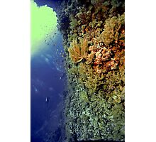 UNDERWATER LANDSCAPE PERSPECTIVES Photographic Print