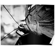 Butterfly On Camera Lens Poster