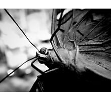 Butterfly On Camera Lens Photographic Print