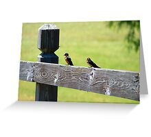 Two Birds Sitting  Greeting Card