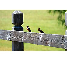 Two Birds Sitting  Photographic Print