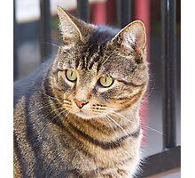 Jimmy, My Cat, Australia. Photographic Print