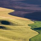 Palouse Canvas by Wendi Donaldson Laird