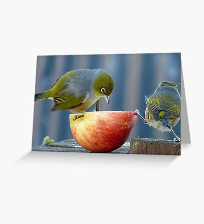 Holding the Apple Up! - Wax Eye NZ - Southland Greeting Card