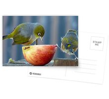 Holding the Apple Up! - Wax Eye NZ - Southland Postcards