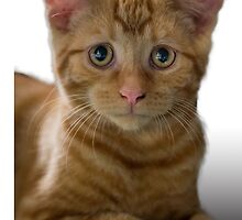 Concerned Kitten by Roger  Mackertich