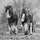 Working horses by peaky40
