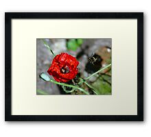 The Bumble & The Poppy - NZ Framed Print