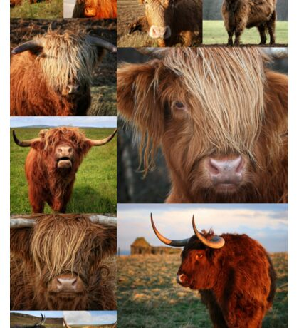 Highlander - Highland Cows - Highland Cattle - Hairy Coo Sticker