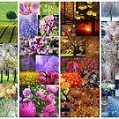 4 Jahreszeiten - 4 Seasons by Martina Cross
