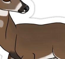 Whitetail Buck Sticker