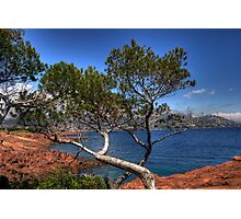 trees over the Mediterranean Sea Photographic Print