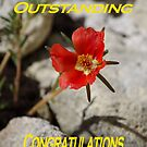 Card: You Are Outstanding Congratulations by Francis Drake
