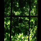 Natures green window by Tom McDonnell