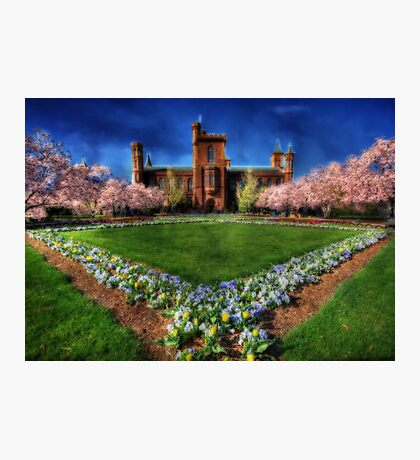 Spring Blooms in the Smithsonian Castle Garden Photographic Print