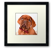 Bow Tie Baby Dogue Framed Print
