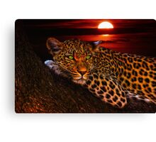 Leopard At Sunset Canvas Print