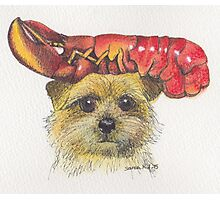 Lobster Terrier Photographic Print