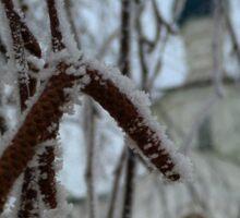 Frost day Sticker