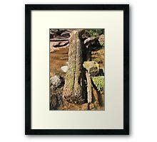 The Fairy Glen Money Tree Framed Print