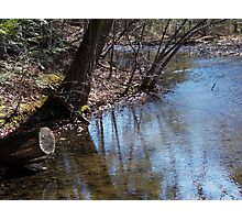 Pondside Photographic Print