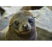 Fur seal Photographic Print