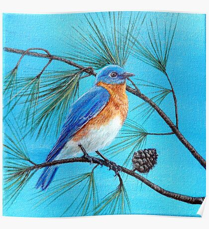 Blue bird on pine tree branch Poster
