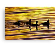 golden sunset lit water with ducks Canvas Print