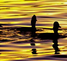 golden sunset lit water with ducks Sticker