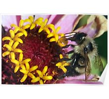 Mealtime for a Bee Poster