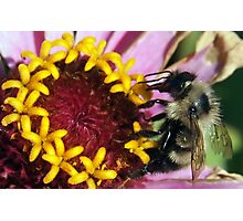Mealtime for a Bee Photographic Print