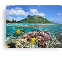 Island coral and fish underwater French Polynesia Metal Print