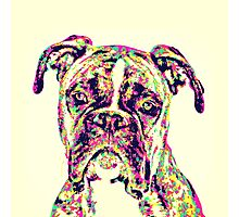 The Mighty Boxer Photographic Print