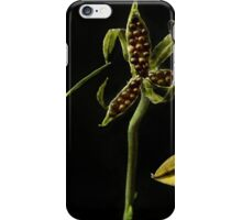 How Violets scatter their seeds,capsule open iPhone Case/Skin