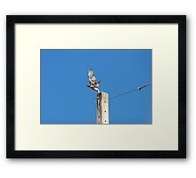 Diving to the Sky Framed Print
