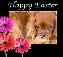 Happy Easter Cavalier King Charles Daisies by daphsam